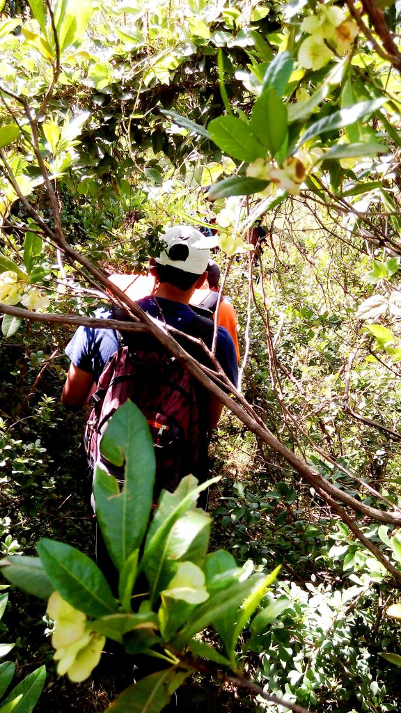 We had to make our own path through the bush in some instances-took a photo of the team member ahead of me.