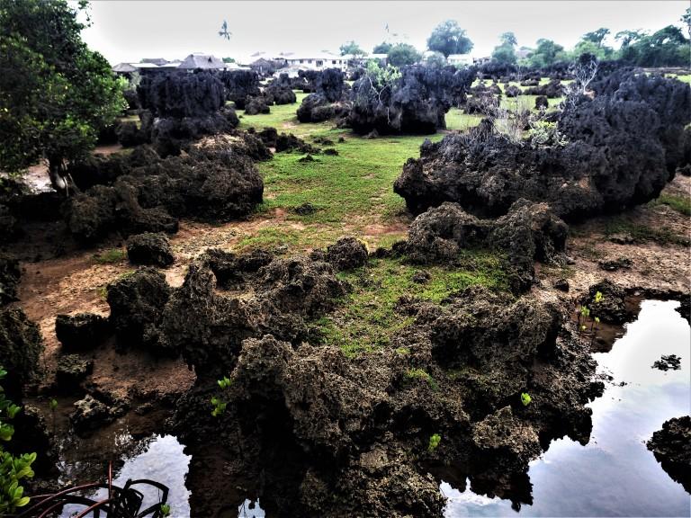 Wasini Coral garden